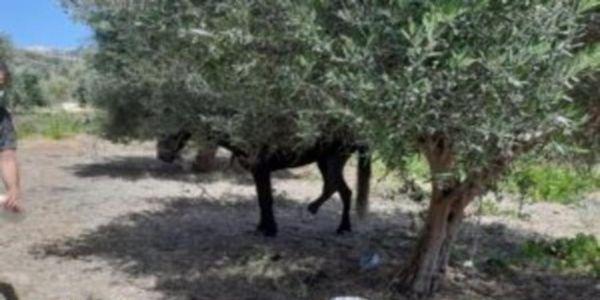 Ηράκλειο: Σύλληψη ενός άνδρα και πρόστιμο 30.000 ευρώ για κακοποίηση αλόγου - Ειδήσεις Pancreta