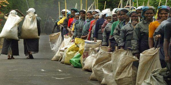 Άποψη: Ιδιωτικός τομέας και καταπολέμηση της καταναγκαστικής εργασίας - Ειδήσεις Pancreta