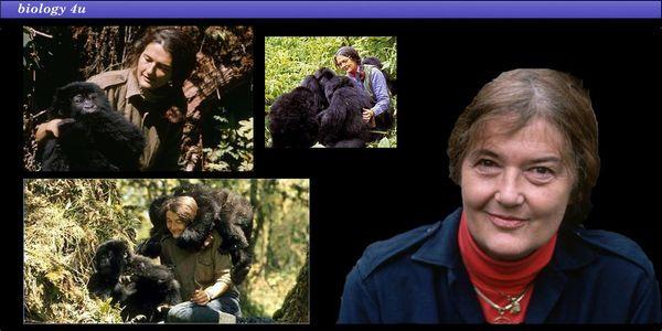 Μια μέρα σαν κι αυτή στην ιστορία της Επιστήμης: Dian Fossey, ζώντας και πεθαίνοντας με τους γορίλλες