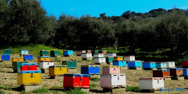 Περνά - περνά η μέλισσα! - Ειδήσεις Pancreta
