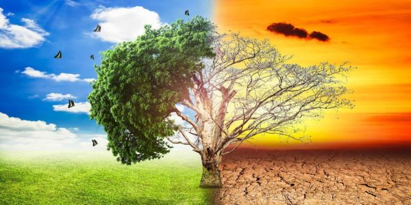 Η κλιματική κρίση, οι πυρκαγιές... και το πιάτο μας - Ειδήσεις Pancreta