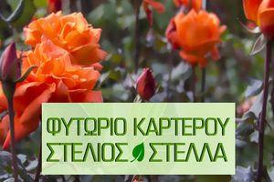 Φυτώριο Καρτερού Στέλιος & Στέλλα