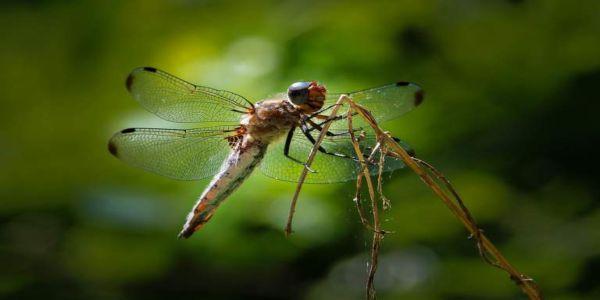 Κι αν εξαφανιστούν όλα τα έντομα;