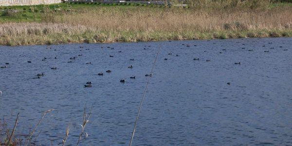 Χανιά: Σήμερα η Γιορτή των Πουλιών στην λίμνη της Αγιάς - Ειδήσεις Pancreta