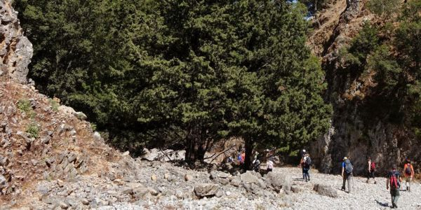 Φαράγγι Καβή (Ίλιγκας) - Ειδήσεις Pancreta