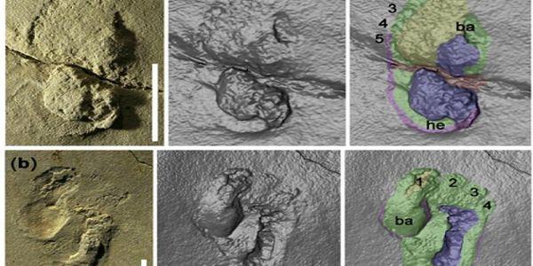 Τα παλαιότερα ίχνη βάδισης ανθρώπου ανακαλύφθηκαν στην Κίσσαμο - Ειδήσεις Pancreta