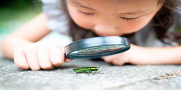 Η «αποκάλυψη των εντόμων». Τα μισά στον πλανήτη απειλούνται και μαζί τους και η ανθρώπινη ζωή